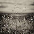 The Wrekin, Grass Eye View. by Maybrick