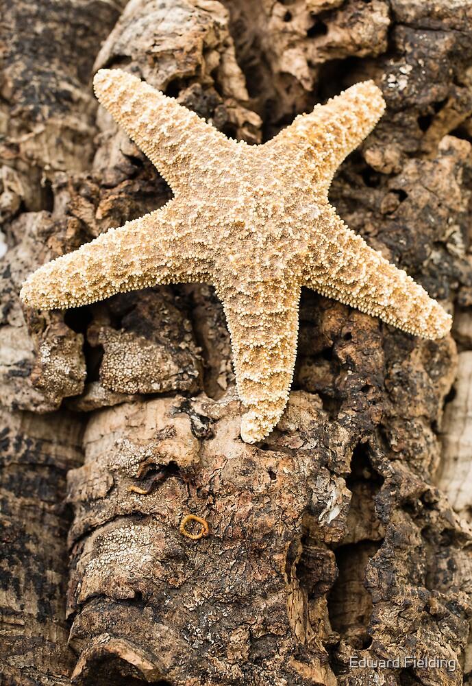 Starfish by Edward Fielding