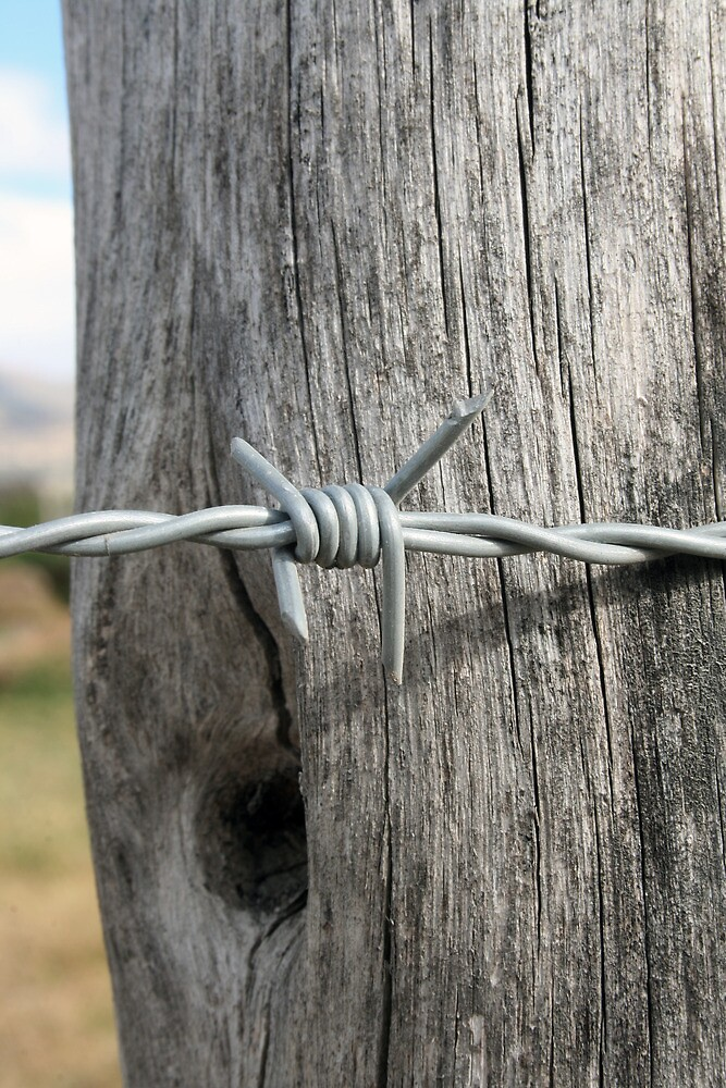 Barbed Wire by rhamm