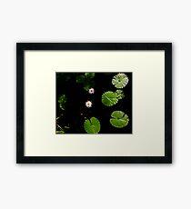 Water Lillies on Dark Water Framed Print