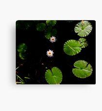 Water Lillies on Dark Water Canvas Print