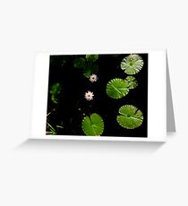 Water Lillies on Dark Water Greeting Card