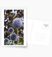 allium flower Postcards