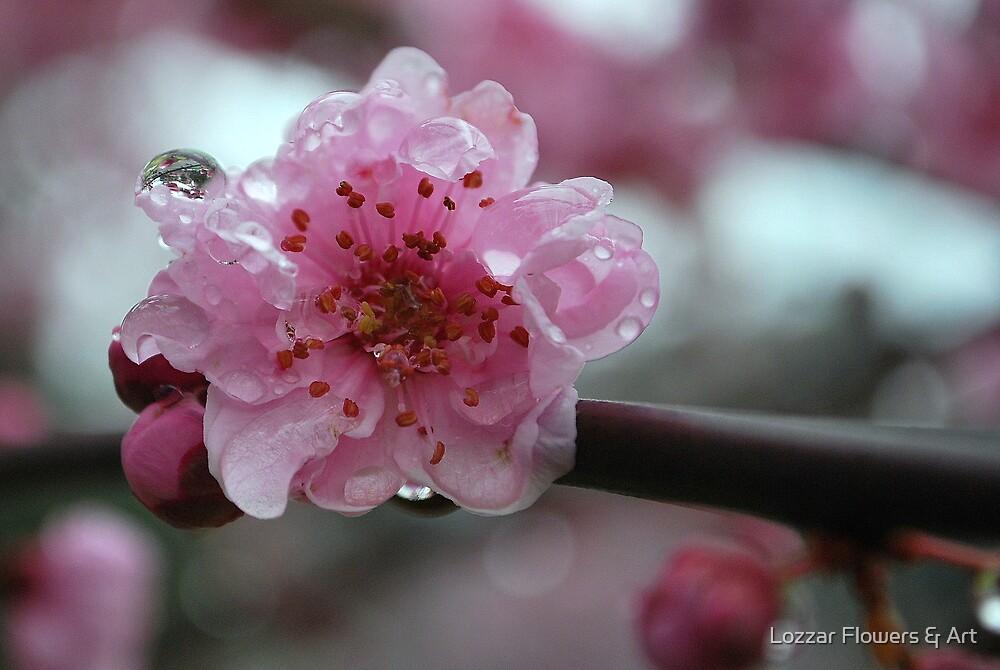 First Spring Rains by Lozzar Flowers & Art