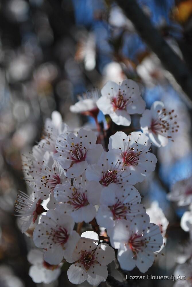Burst of Spring by Lozzar Flowers & Art