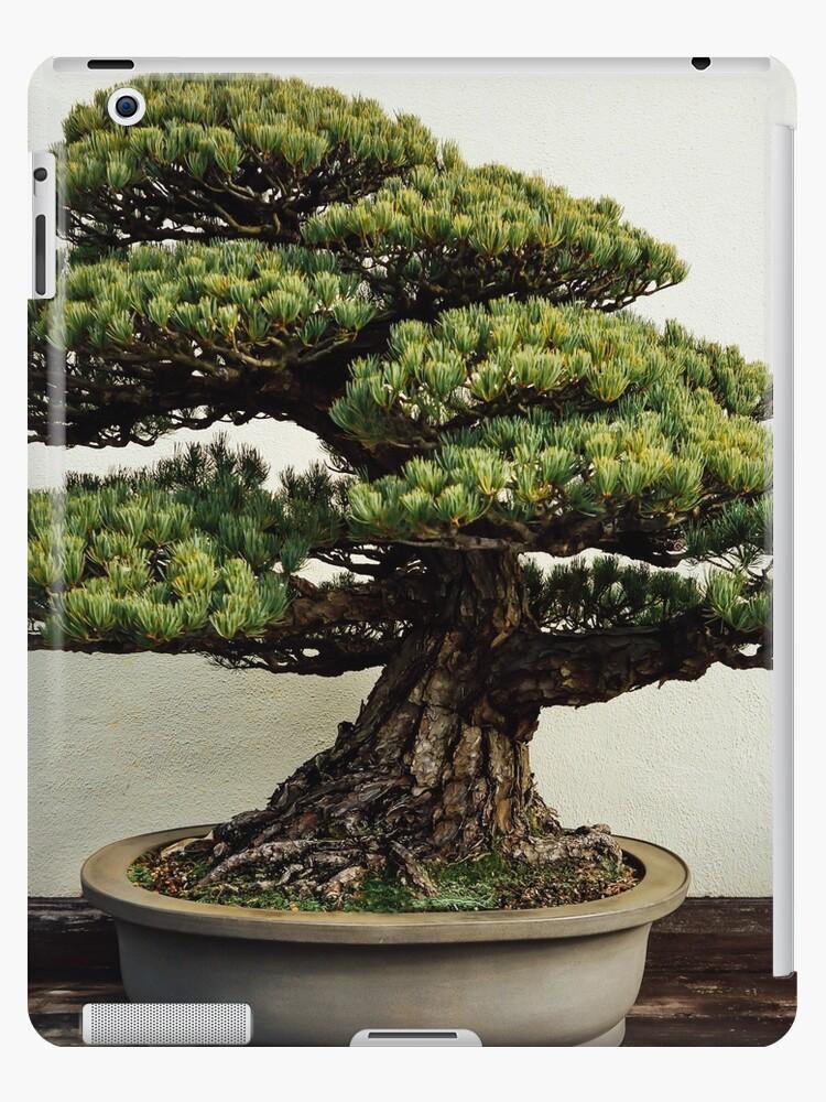 Japanese White Pine Bonsai Ipad Case Skin By Corydean Redbubble