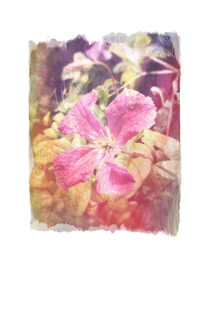 Antique Look Late Summer Purple Clematis Photograph by pastpresent