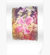 Antique Look Late Summer Purple Clematis Photograph Poster