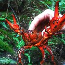Freshwater Crayfish - Claustral Canyon by Marilyn Harris