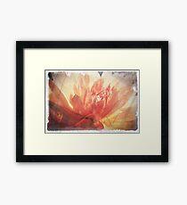 Antique Look Pretty Orange Flower Photograph Framed Print