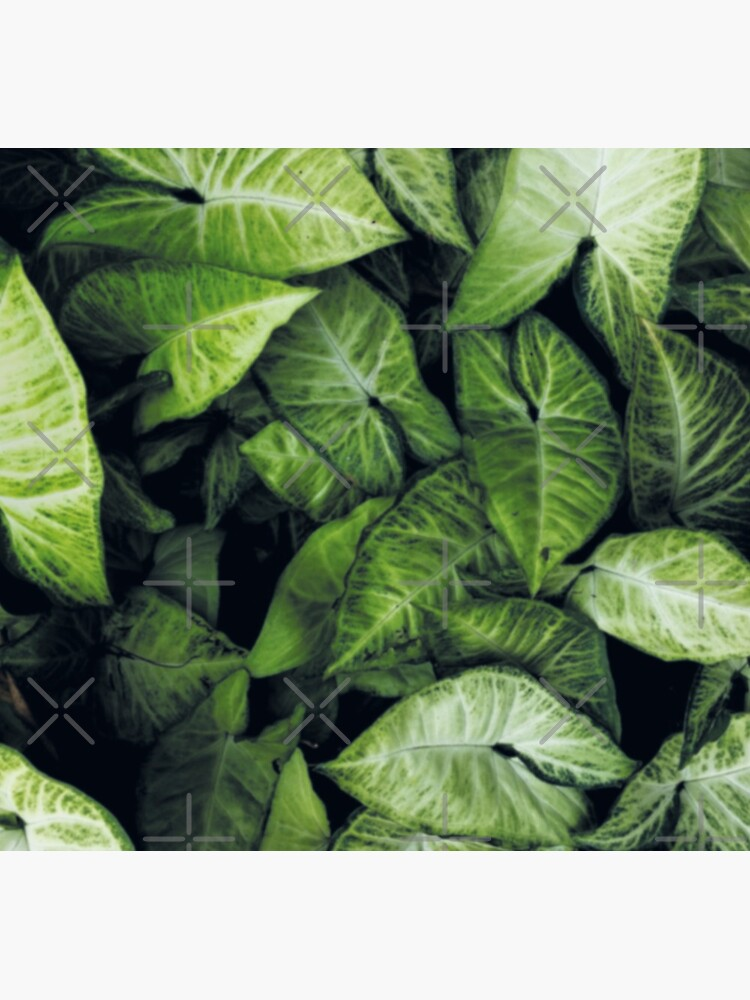 Green leaves by ColorsHappiness