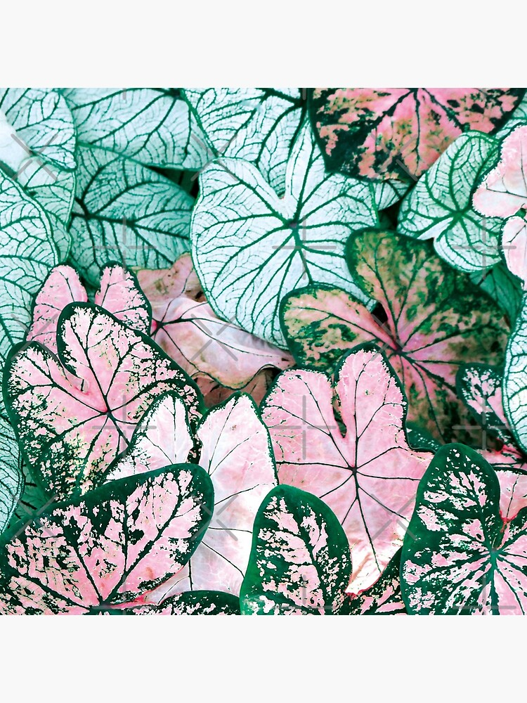 Green and pink leaves by ColorsHappiness