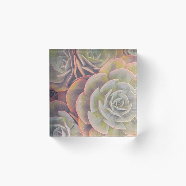 Green and pink succulent Acrylic Block