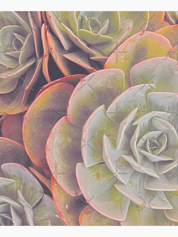 Green and pink succulent by ColorsHappiness