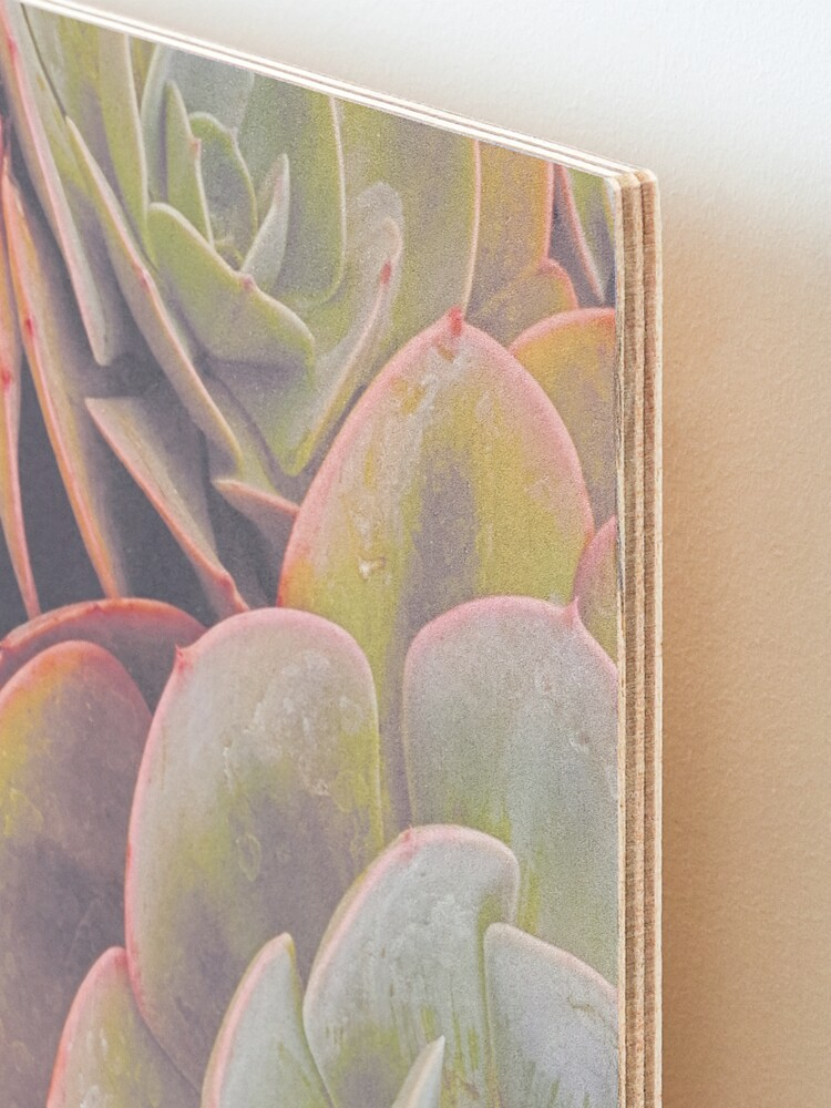 Alternate view of Green and pink succulent Mounted Print