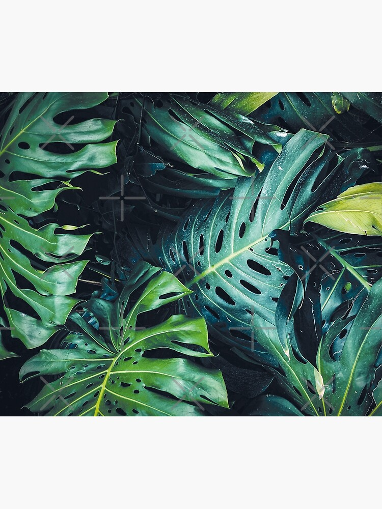 Dark green leaves by ColorsHappiness
