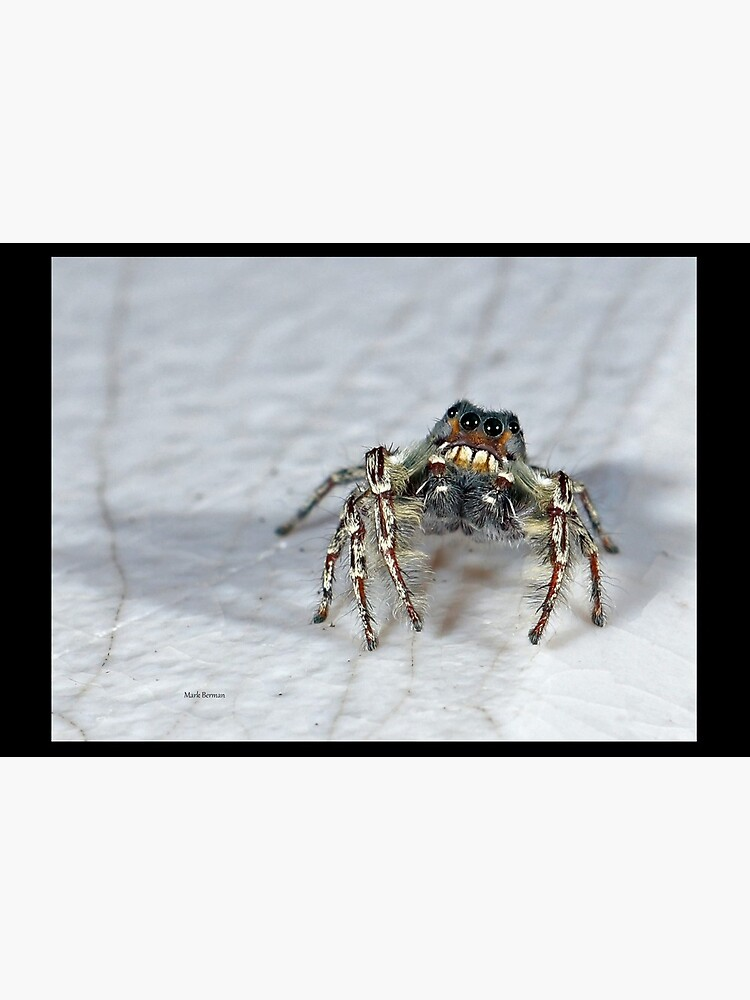 Cute Jumping Spider Checking Things Out by mark-bugs-org
