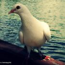 White Dove by Estell