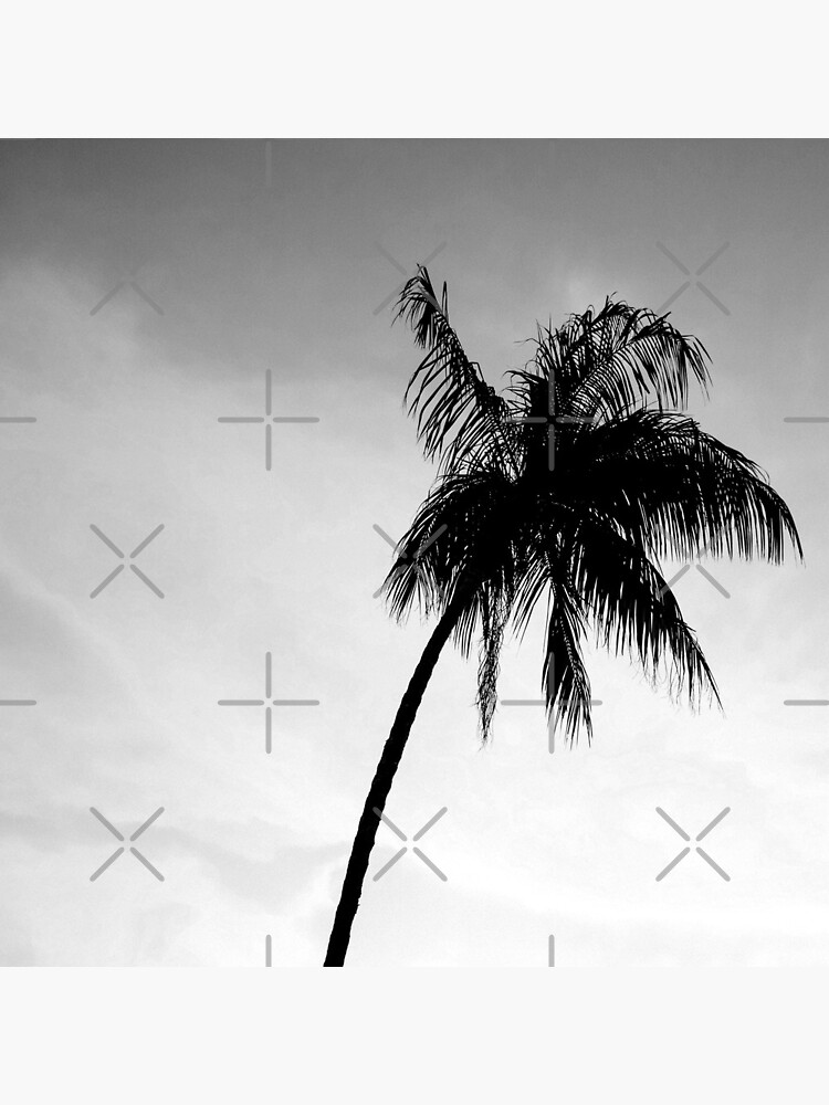 Palmtree black&white by ColorsHappiness