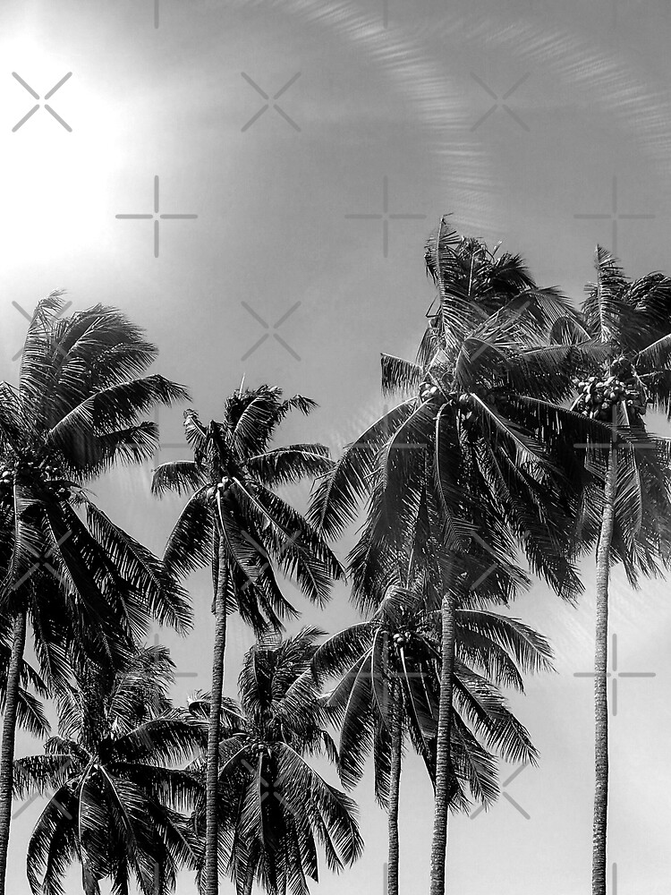 Palmtrees black&white by ColorsHappiness
