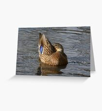 Mallard Duck Hen Greeting Card
