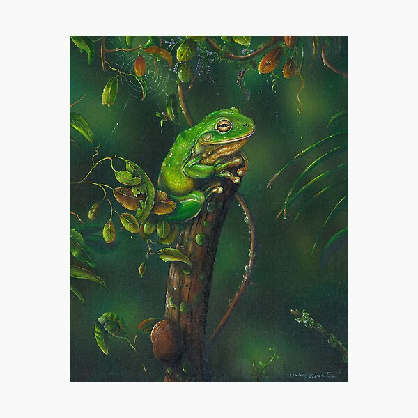 GreenTree Frog . Photographic Print