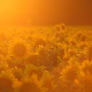 Summer Glow by Lisa Holmgreen Porier