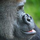 Mountain Gorilla by Kathy Baccari