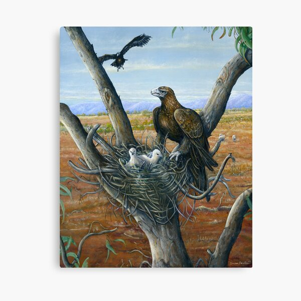 Wedge Tail Egale  Canvas Print