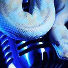 Python & a Shure 55 by Chris Porteous