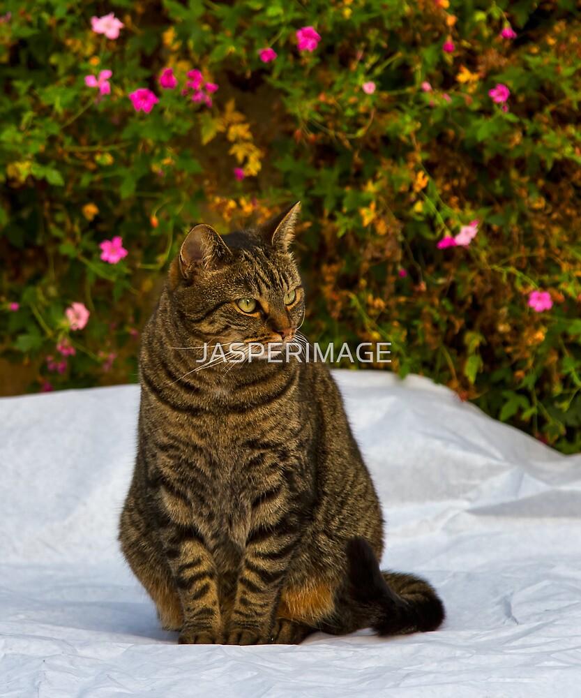 ZENA - THE SCOTTISH TIGER by JASPERIMAGE