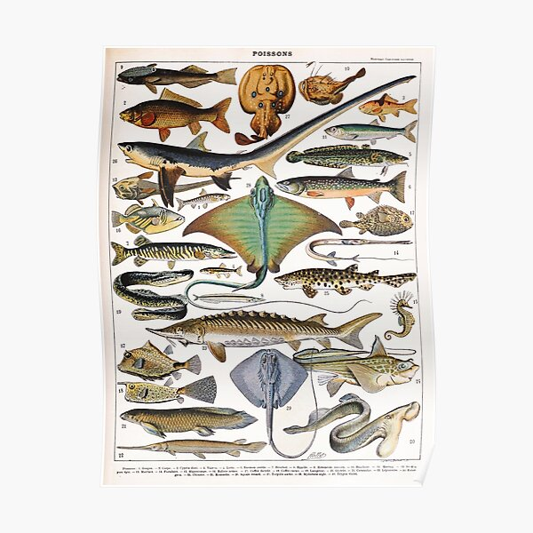 Adolphe Millot - Poissons A - French vintage nautical poster Poster