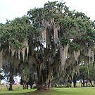 Mossy Oak by virginian
