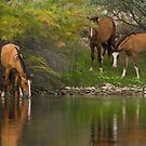 Wild Along the River by Sue  Cullumber
