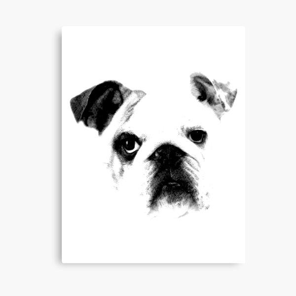 Bulldog Face Dog Engraving Canvas Print