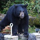 Curious bear cub by zumi