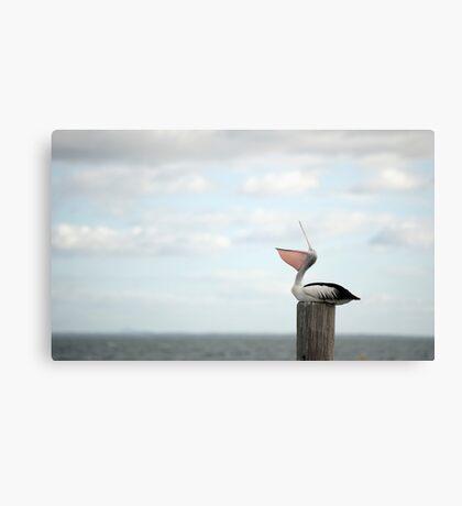 ha ha ha - laughing pelican Canvas Print