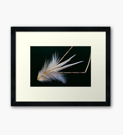 wind traveler Framed Print