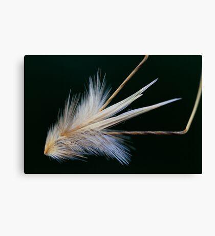 wind traveler Canvas Print
