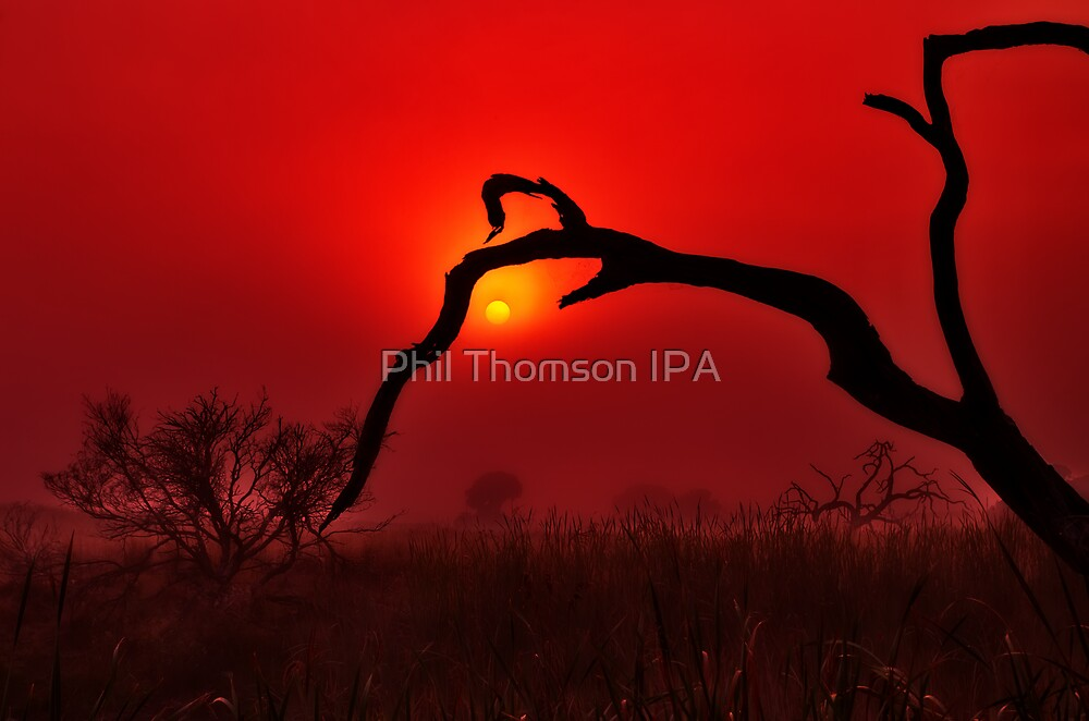 """Dawn On The Floodplain"" by Phil Thomson IPA"