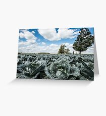 Cabbage Rolls Greeting Card