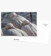 Catching 40 winks Postcards