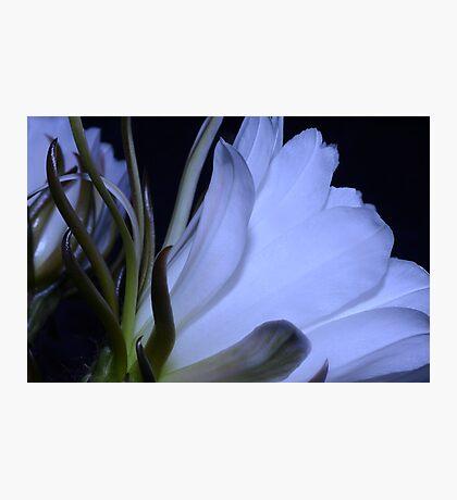 Night Beauty Photographic Print