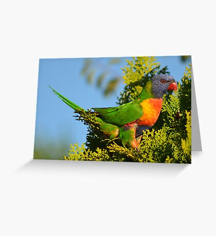Colours! Greeting Card