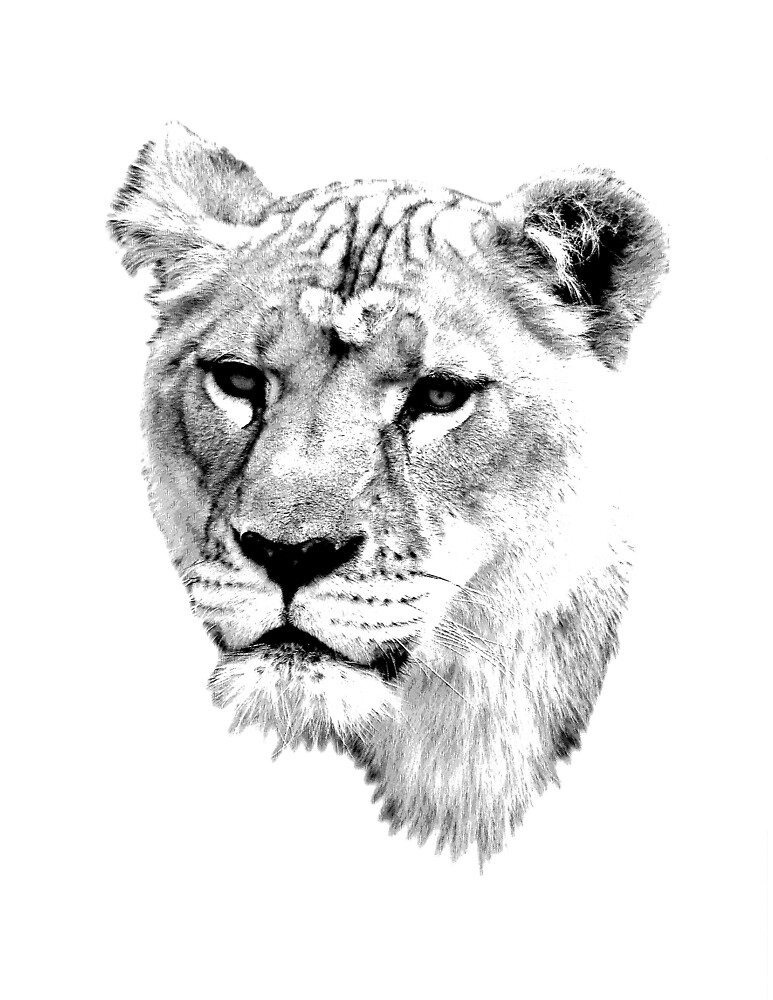 """Lioness. Female Lion. Digital Wildlife Engraving Image ... Queen Lioness Drawing"