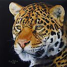 Shining Bright - Jaguar by Anne Zoutsos