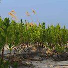 Sand Dune Weeds by virginian