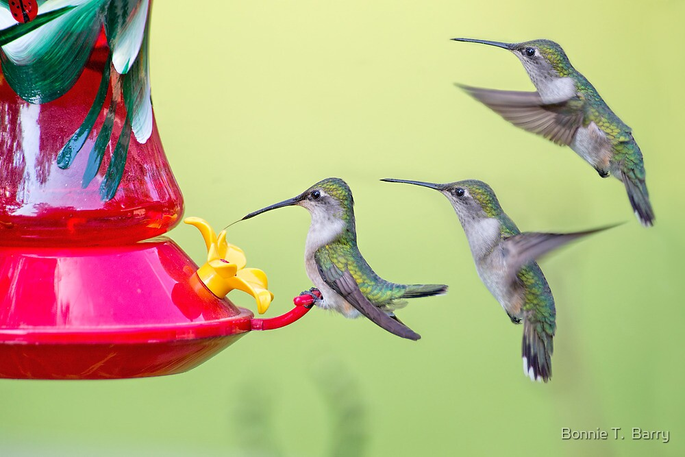 Lunch Line by Bonnie T.  Barry