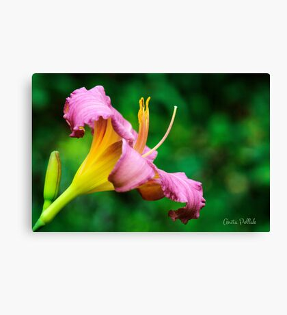 Lovely Little Grapette Canvas Print