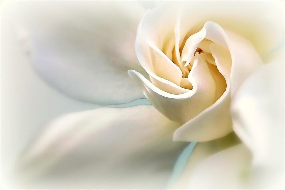 White Gardenia by paintingsheep